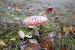 Im Pfläzlerwald gibt es Pilze aller Art