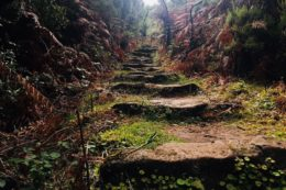 Madeira ist bekannt für die vielen Wanderpfade
